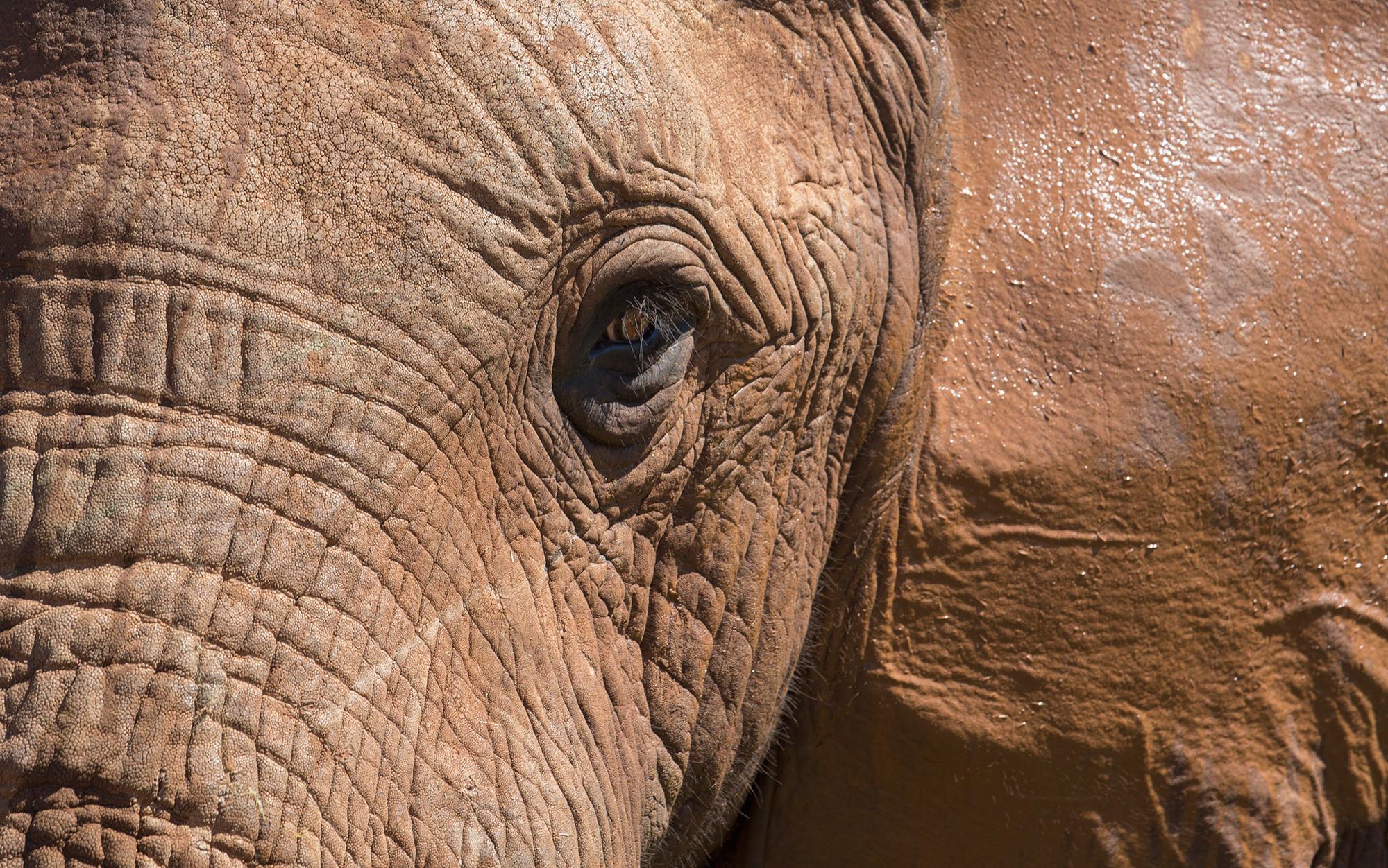 Resultado de imagem para The elephant as a person Photo by Robert Postma/Design Pics/National Geographic