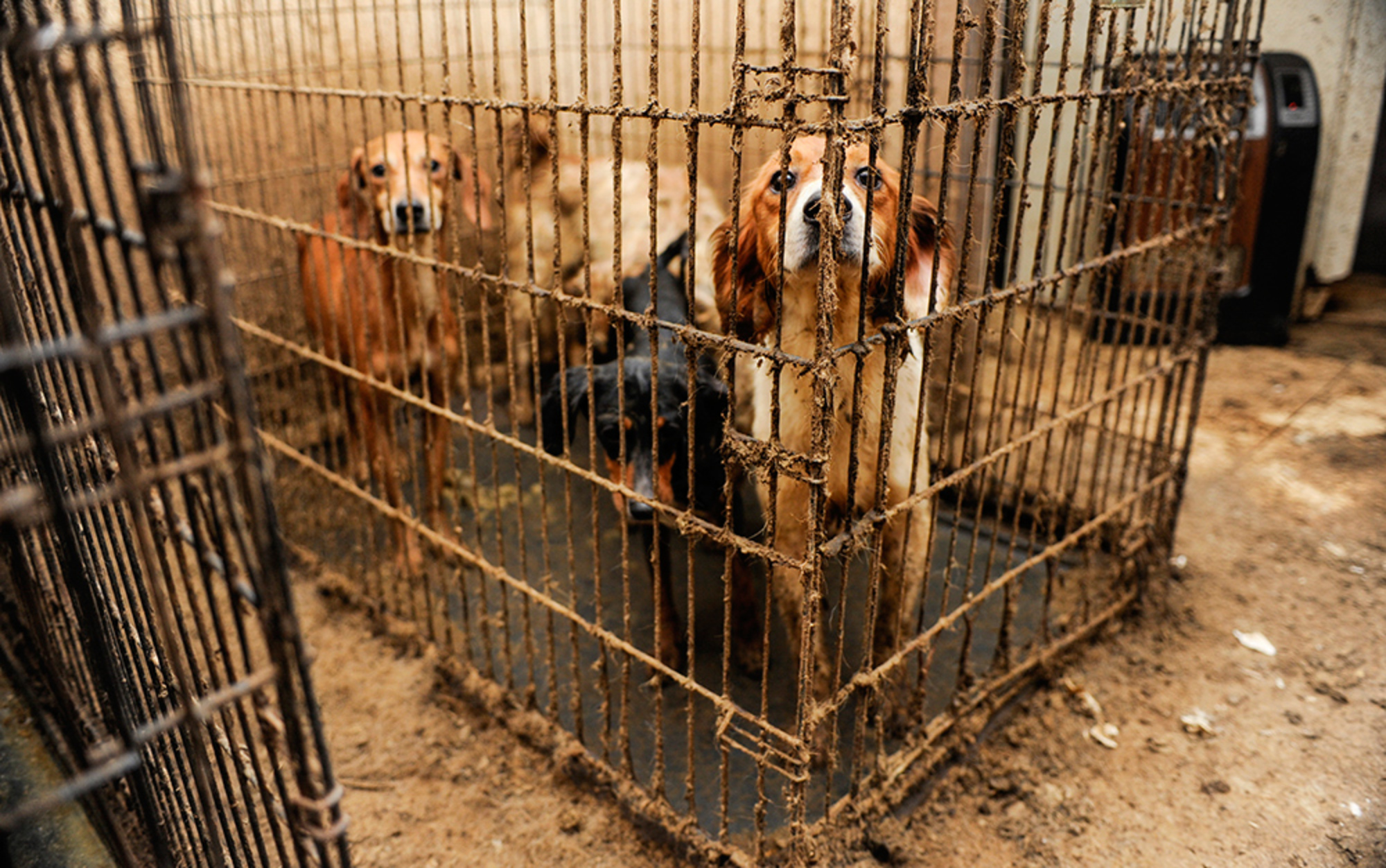 animal abuse is cruel and inhumane essay Read this essay on animal cruelty cruel owners 2008 animal cruelty imagine being a spectator of the most gruesome and inhumane act known to man.