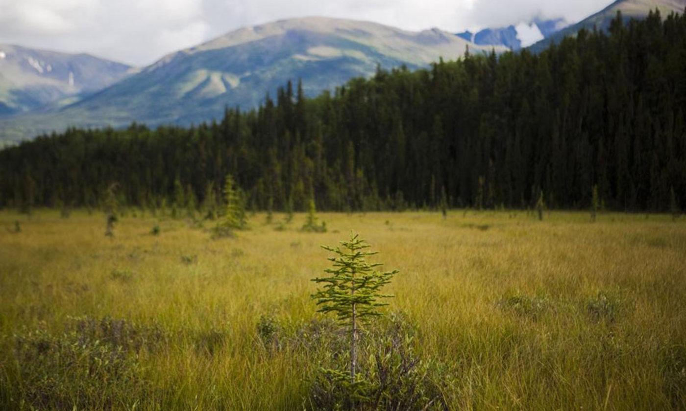 The last meadows? | Aeon