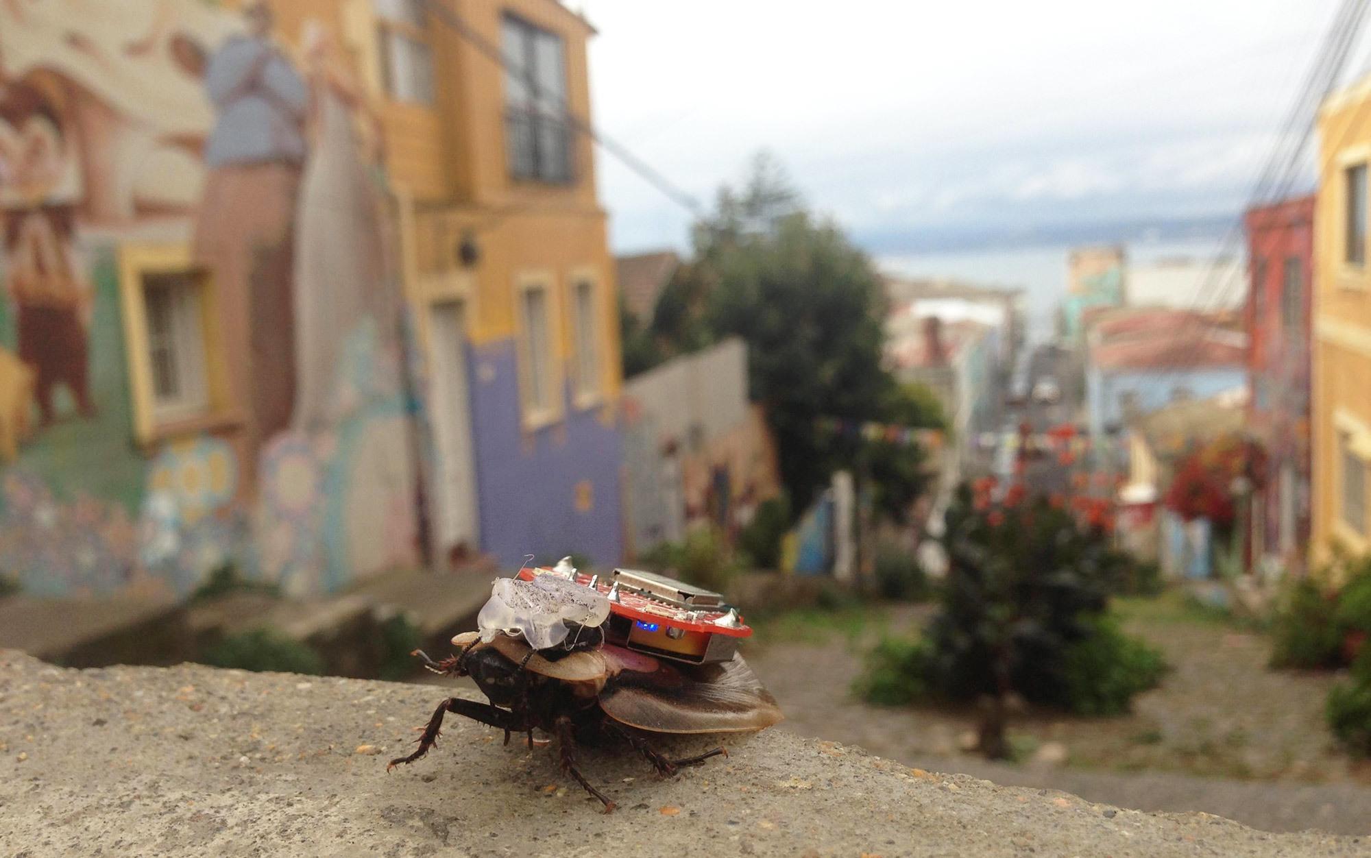 I, cockroach   Aeon
