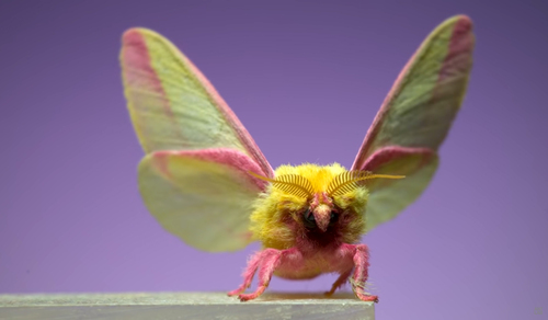 Moths in slow motion | Aeon
