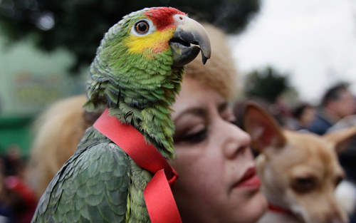 Card parrot