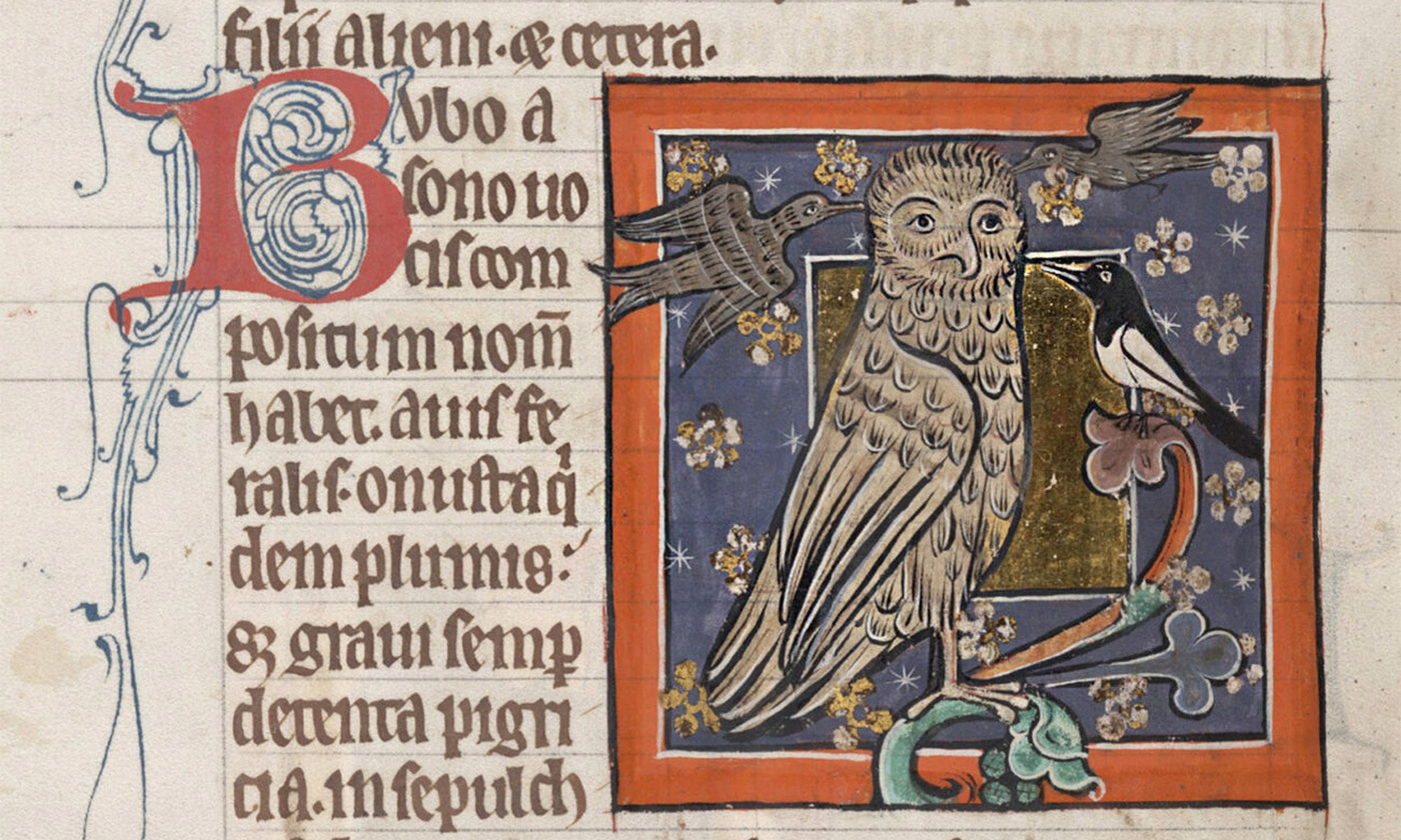 <p>An owl from a bestiary (<em>c</em>1226-50), England. MS Bodley 764, Folio 73v. <em>Courtesy Bodleian Libraries, University of Oxford</em></p>