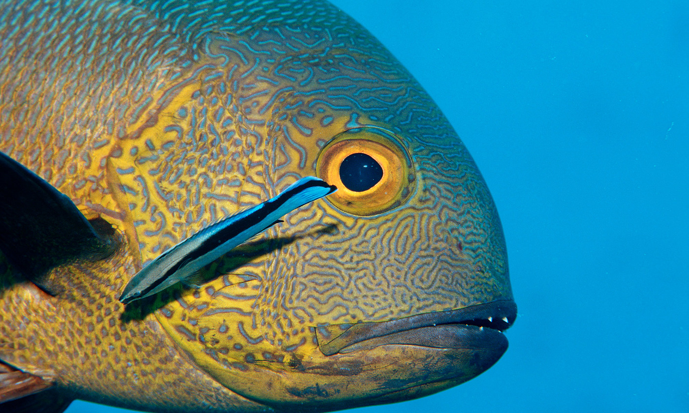 The face of the fish | Aeon