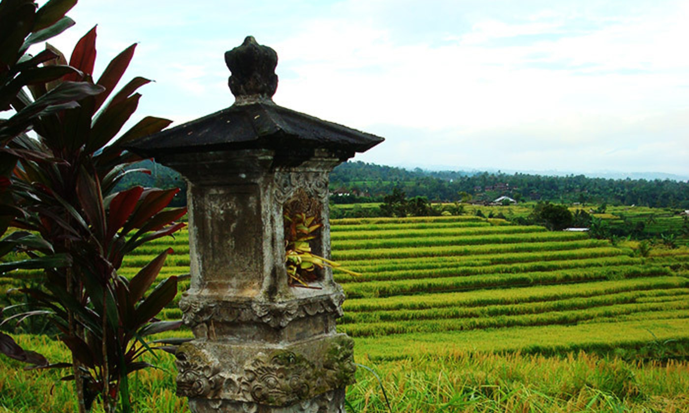 <p><em>Metis</em> as <em>subak</em>. The traditional Balinese irrigation system for rice farmers. <em>Courtesy Wikipedia</em></p>