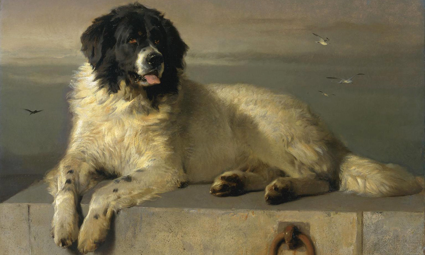 <p><em>A Distinguished Member of the Humane Society (</em>1831) by Edward Landseer. 'Bob' a Newfoundland dog, saved 23 persons from drowning on the London docks and was made a distinguished member of the Royal Humane Society. <em>Courtesy Wikipedia</em></p>