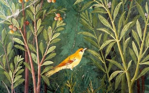 Birds are 'winged words' | Aeon