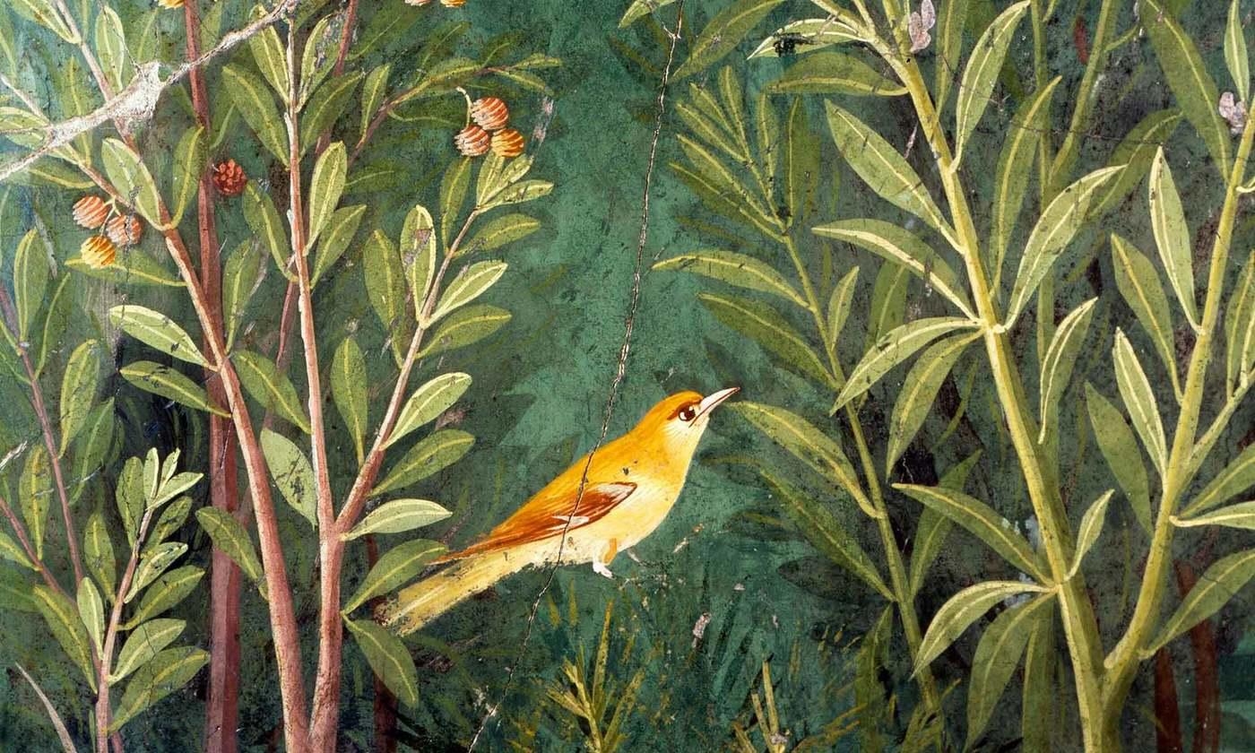 Birds are 'winged words'   Aeon
