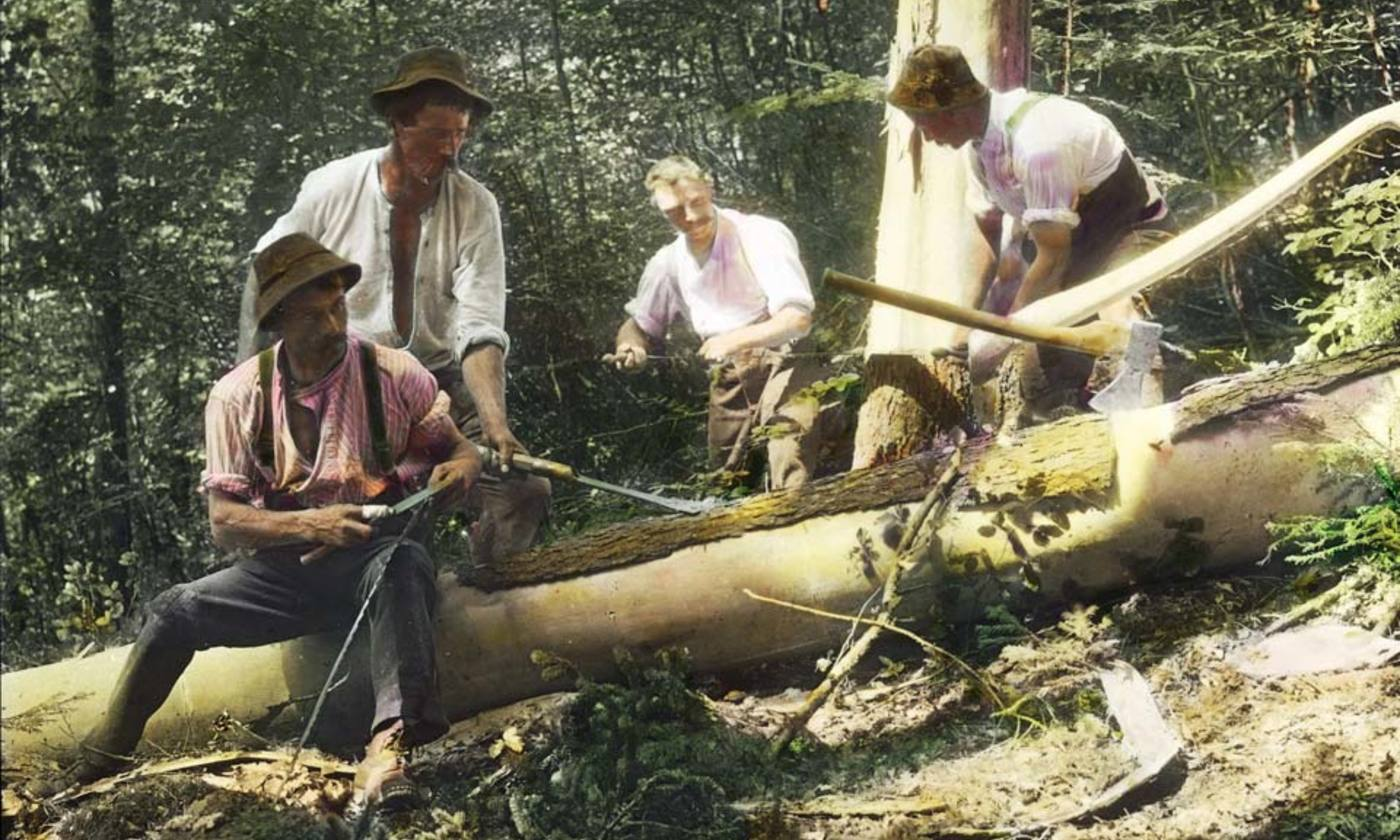 Armchair woodsmen | Aeon