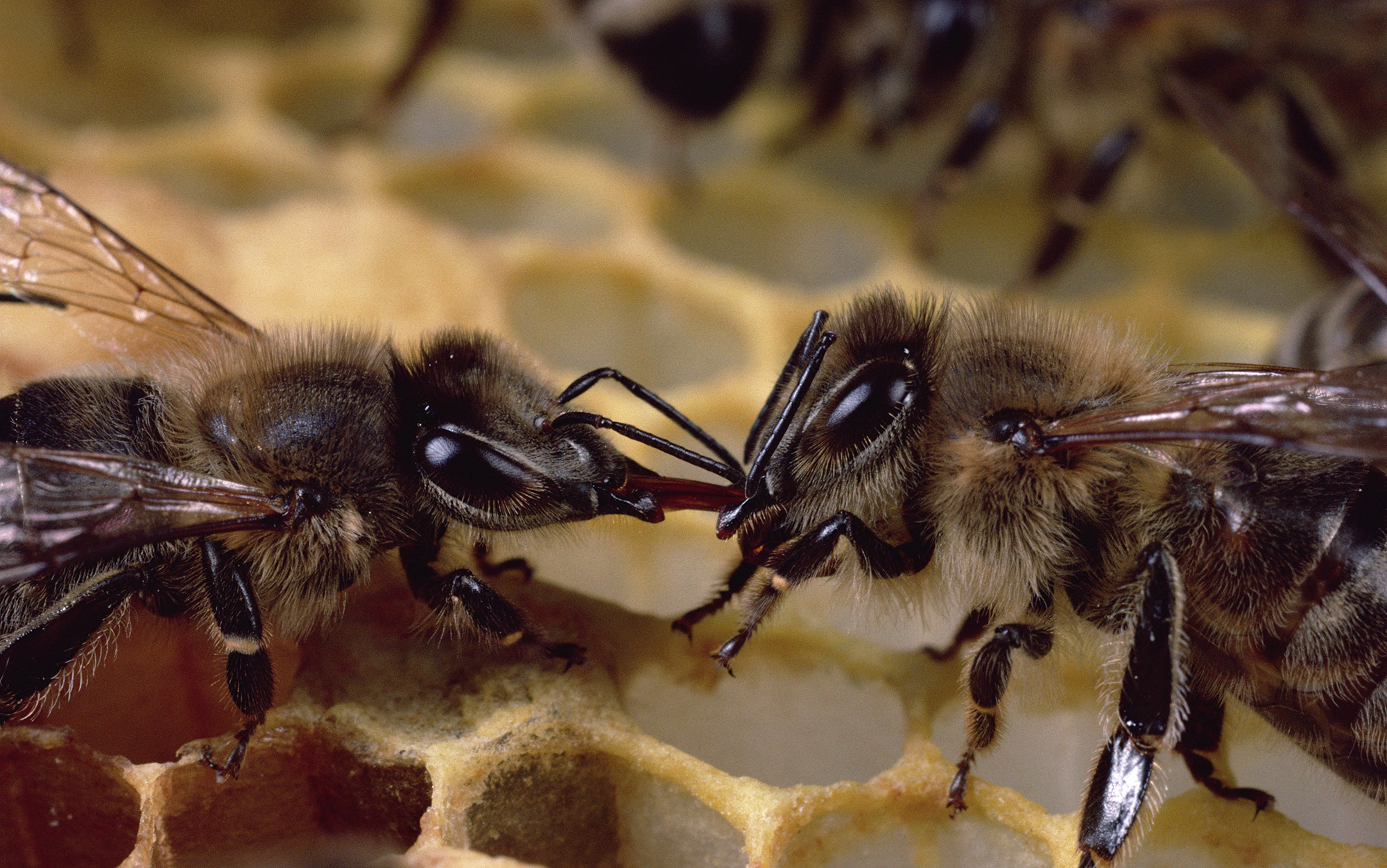 Bee-brained | Aeon