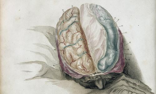 When you split the brain, do you split the person? | Aeon