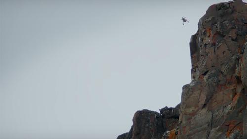 Card chicks jump off cliff main