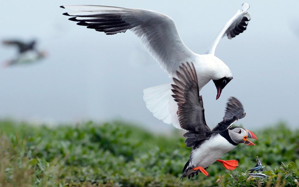 Watch the birdy. Photo by Nigel Roddis/Reuters